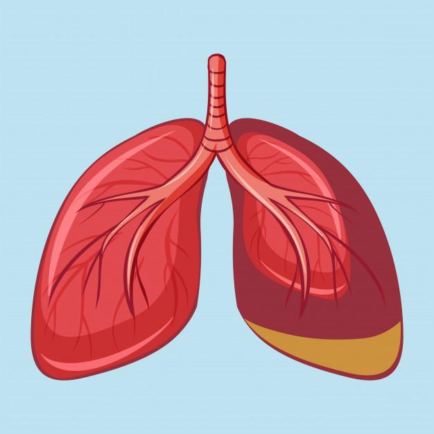 Mês da Hipertensão Pulmonar: doença desconhecida pela maioria da população brasileira