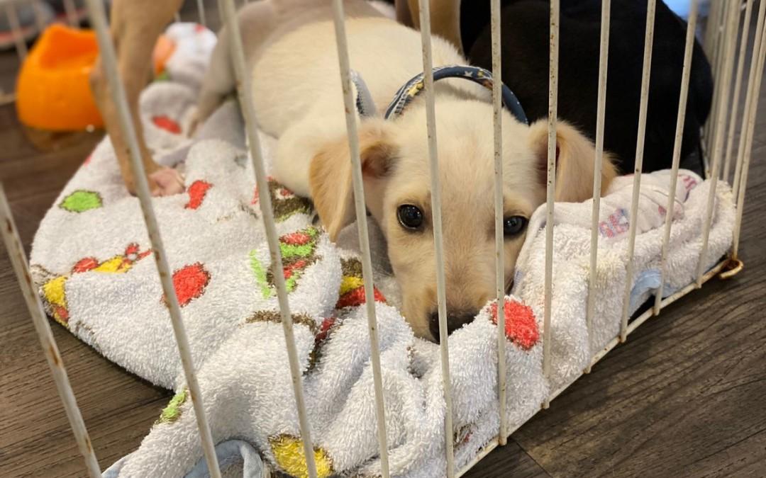 Shopping de Blumenau promove feira de adoção de cães e arrecadação de ração neste fim de semana